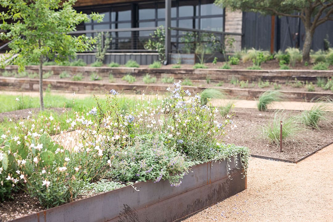 TwoWishesRanchEvents-Wildflowers-Raised-Beds